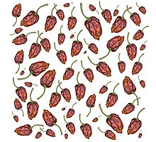 Trinidad Scorpion chilli peppers Photographic Print