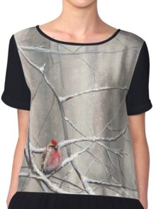 Red Bird On Snowy Branches - Winter Scene with Common Redpoll Chiffon Top