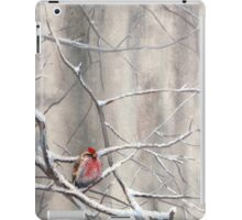 Red Bird On Snowy Branches - Winter Scene with Common Redpoll iPad Case/Skin