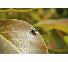 Fly on a Brown Leaf Photographic Print
