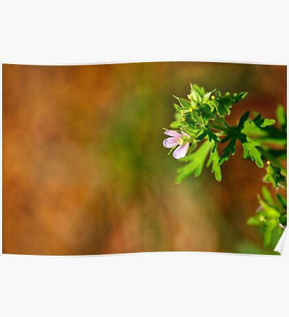 Wildflower Whimsy Poster