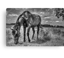 Horse in Field (Black and White version) Canvas Print