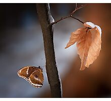 Butterfly on a branch Photographic Print