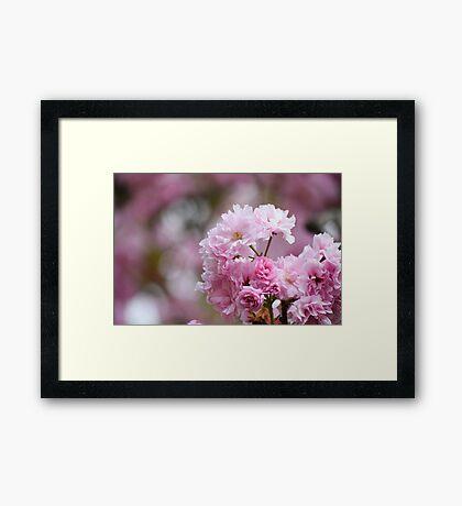 Blossom Flowers Framed Print