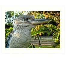 Northern Australia Kookaburra  Art Print