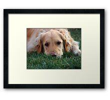 Gracie Pouts Framed Print