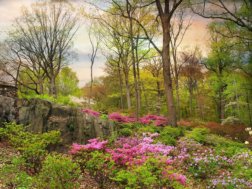 The Azalea Garden by Jessica Jenney