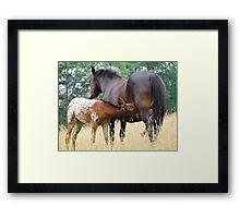 Foal and mare Framed Print