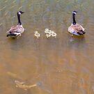 Happy Lake Family by Bo Insogna