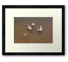 Wild Lake Life Framed Print