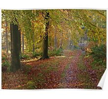 Autumn footpath in Whinfell Forest Poster