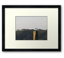 Seagull Sitting by Respite Artwork Framed Print