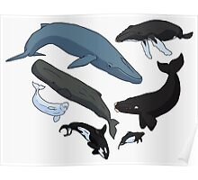 For the Cetacean Lover Poster