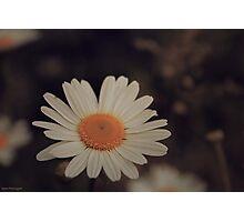 Shabby Chic Flower Photographic Print