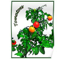 Fruit Tomatoes Poster