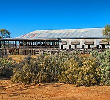 Kinchega Woolshed by Jan Pudney