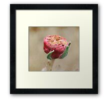 Close up of a Pretty Pink Flower Pod  Framed Print