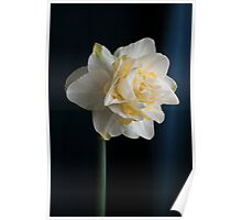 Butter and Eggs Daffodil  Poster
