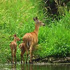 A Precious Family  by lorilee