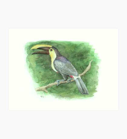 Chestnut-mandibled Toucan Art Print