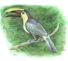 Chestnut-mandibled Toucan by NearBird