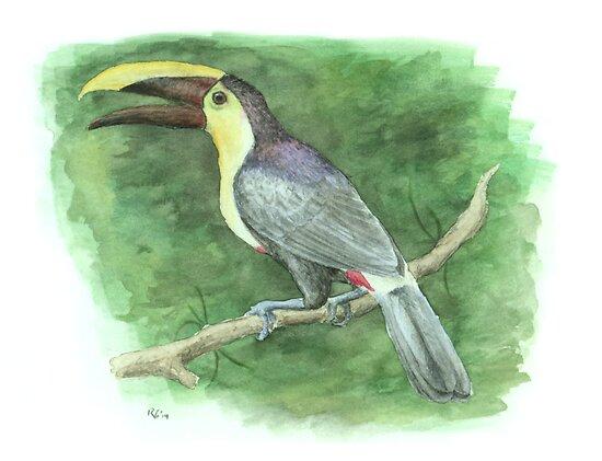 Chestnut-mandibled Toucan by NearBird