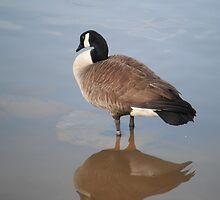 Goose Reflection by Respite Artwork by Respite-Artwork