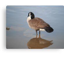 Goose Reflection by Respite Artwork Canvas Print