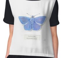 Common Blue on White Chiffon Top