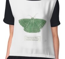 Large Emerald Moth on White Chiffon Top