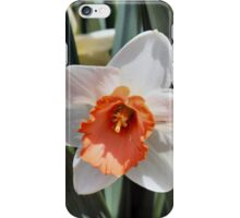 Daffodils Return!! iPhone Case/Skin