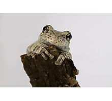 Adorable Smiling Tree Frog Photographic Print