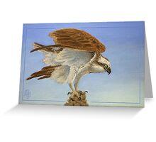 Take-off - Osprey (Pandion haliaetus) Greeting Card