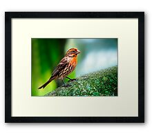 Little Red... Framed Print