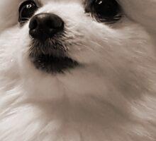 Gabe the Dog - Birthday Sticker