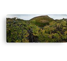 Mt. Field Fagus Canvas Print