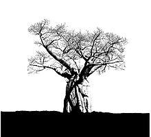 Baobab by designseventy
