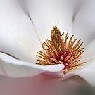 Magnolia's Heart Center  by Poete100