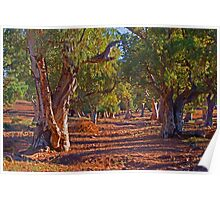 Red River Gums Poster