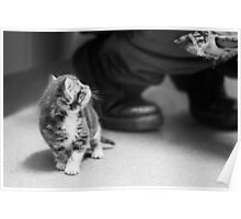 Tiny Kitten (non-clothing products) Poster