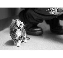 Tiny Kitten (non-clothing products) Photographic Print