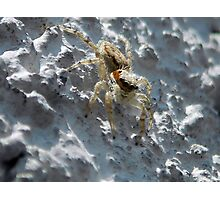 ©NS A Spider Life XX IA Photographic Print