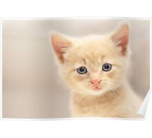 Ginger Kitten (non-clothing products) Poster