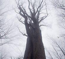 Black Cherry in the Fog (Prunus serotina) by er1kksen