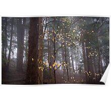 Beech Leaf Starlight (Fagus grandifolia) Poster