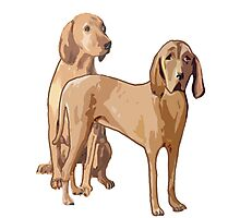 Redbone Coonhounds Photographic Print