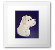 The Dog (Staffordshire Bull Terrier) Framed Print