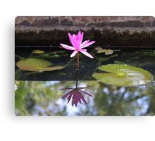 Pink waterlily with reflection in a pond Canvas Print