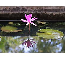 Pink waterlily with reflection in a pond Photographic Print