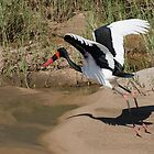 Saddle-Billed Stork by Vickie Burt